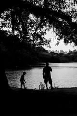 (Selva SP) Tags: parque lago sopaulo pb ibirapuera criana cisne silhueta parqueibirapuera gustavomorita selvasp