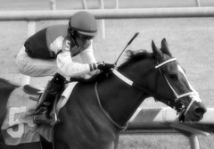 "2015-12-13 (95) r2 Victor Carrasco on #5 Anna May Our Queen (JLeeFleenor) Tags: photos photography md marylandracing marylandhorseracing laurelpark bw blackwhite blackandwhite jockey جُوكِي ""赛马骑师"" jinete ""競馬騎手"" dżokej jocheu คนขี่ม้าแข่ง jóquei žokej kilparatsastaja rennreiter fantino ""경마 기수"" жокей jokey người horses thoroughbreds equine equestrian cheval cavalo cavallo cavall caballo pferd paard perd hevonen hest hestur cal kon konj beygir capall ceffyl cuddy yarraman faras alogo soos kuda uma pfeerd koin حصان кон 马 häst άλογο סוס घोड़ा 馬 koń лошадь maryland"