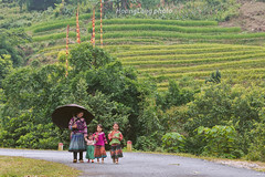 Y7115.0913.Nm Dn.Xn Mn.H Giang. (hoanglongphoto) Tags: life road family girls people plant canon asian women asia outdoor vietnam childrens dailylife hillside colorimage vitnam motheranddaughters gianh hmongwomen mu cucsng hmongfamily hgiang ithng trem hmongpeople ngoitri conng tybc phn conngi thcvt chu vietnamnorth ngnam xnmn cucsngthngngy canoneos1dx nhmu icy nmdn mvcongi canonzoomlensef70200mmf28lisiiusm sni treehillcolor gianhngihmng
