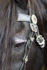 Jasper (HendrikSchulz) Tags: horses horse germany deutschland fair bodensee messe pferde pferd friesen blackpearl friedrichshafen friesian 2016 frisian animalphotography blackpearls tierfotografie horsefair frisians friesians dfz canonef85mmf18usm friesianhorse friesianstallion pferdefotografie horsephotography schwarzeperle friesianstallions friesenhengst schwarzeperlen canoneos600d hendrikschulz hendriktschulz friesenhengste pferdbodensee2016 friesenzchter