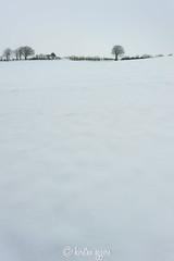 _DSC6152KirstenEggers (Kiki m. E.) Tags: schnee trees winter snow field germany deutschland wide feld land bume schleswigholstein knick acker weit norddeutschland rensburgeckernfrde