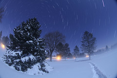 The Beauty after the Blizzard (Radical Retinoscopy) Tags: nightphotography trees snow pine stars wideangle fisheye pines astrophotography lancaster astronomy nightsky lancastercounty blizzard startrail circumpolar canon815mm starstax blizzardof2016 canont6s