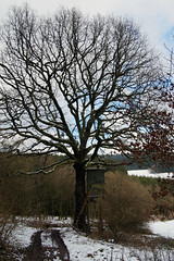 Nach Kruberg (dieter.steffmann) Tags: sauerland kirchhundem drewerwald kruberg bilsteinerland