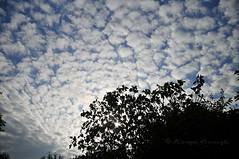 ncir ve Gkyz (Hseyin Baaolu) Tags: nature turkey trkiye turquie bulutlar troia bulut gkyz biga turkei dardanel doa tabiat anakkale pegai nikond300s gmay hseyinbaaolu huseyinbasaoglu dimetoka dthseyinbaaolu meddenthuseyinbasaoglu demetoka nikkor18mmf3556vriiifed