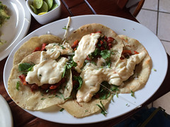 "Oaxaca: des tacos gratinés <a style=""margin-left:10px; font-size:0.8em;"" href=""http://www.flickr.com/photos/127723101@N04/25410449400/"" target=""_blank"">@flickr</a>"