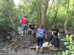 33-Env&CivSoc-World-Water-Day-LCK-Cleanup-26Mar16 (Habitatnews) Tags: mangrove capt nus worldwaterday limchukang iccs