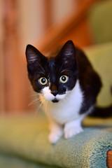 Cute kittens (gary.tootle17) Tags: 25faves nikon85mm18g nikon cat kitten cute