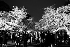 Tokyo Party (H.H. Mahal Alysheba) Tags: park tree monochrome japan night lumix tokyo ueno snapshot culture sakura summilux 25mmf14 gx7 leicadg
