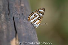 Argentinien_Insekten-48 (fotolulu2012) Tags: tierfoto