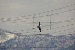 Osprey () Tags: osprey seahawk