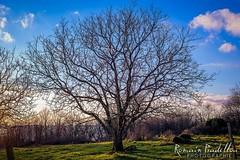 Tree of Life (Romain Pradellou) Tags: tree nature arbre correze limousin