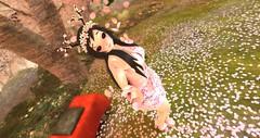 Cherry Blossoms (Destiny Starz) Tags: flowers trees anime ecchi hentai