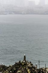 Alcatraz Island, San Fransisco California CA (Virginia Photographer Heather Grow) Tags: ocean sf california ca seagulls water rain fog island san pacific prison jail alcatraz fransisco