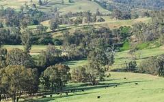 1157 Bald Ridge Road, Burraga NSW