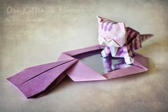 Periwinkle Kitten & Magic Mirror (Oriland) Tags: toronto ontario canada texture cat canon paper paperart eos rebel mirror book design kitten origami magic kitty paperback periwinkle publication   caturday paperdesign oriland noglue 750d orilandcom yuriandkatrinshumakov origamikittenbykatrinshumakov t6i origamikitten origamisailing paperkittensandturtles orilandkitten