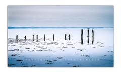 Calming (RonnieLMills) Tags: light seagulls seaweed water island wooden lough tide low calming calm rough rotten hazy posts strangford newtownards comber islandhill