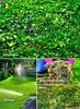 Мой прекрасный сад сп 1 2016