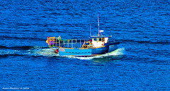 Scotland Greenock prawn and crab boat GW42 returning to port after dropping its cages for the day 31 March 2016 by Anne MacKay (Anne MacKay images of interest & wonder) Tags: by river anne march scotland clyde greenock boat picture crab mackay 31 prawn 2016 xs1 gw42