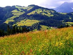 Sommer in den Bergen - Summer in the Mountains (Gerhard Geissler) Tags: tirol sterreich reithbeikitzbhel