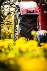 IMG_8725.jpg (vossemer) Tags: de deutschland jahreszeiten natur pflanzen blumen verkehr traktoren frhling blten trecker niedersachsen lwenzahn jork frhjahr