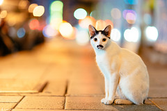 (rabbit7419999) Tags: street cats night cat taiwan taipei a99 sal85f14za