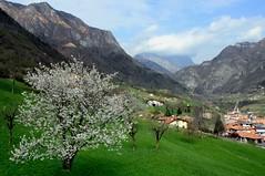 Spring in Valle Camonica (annalisabianchetti) Tags: italy mountains green primavera spring brescia vallecamonica
