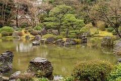 20160229-110430_5K_80 (pya) Tags: kyoto 京都 camellia plumblossoms jonangu 梅花 茶花 城南宮 椿花 weepingplumblossoms