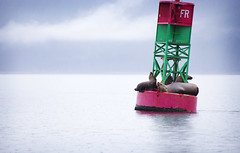 Sea Lions by the Sea (angela_altobelli) Tags: travel blue sea color nature water animal animals alaska canon outdoor juneau lanscape