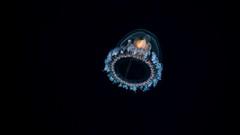 P3255698 (Jeannot Kuenzel) Tags: leica blue sea macro water port photography islands la mediterranean underwater alien under deep scuba diving canarias olympus malta el zen canary supermacro moods asph islas f28 45mm underwaterworld s2000 dg gomera 240z hierro underwaterphotography extrememacro ois jeannot inon macroelmarit underwatercreature kuenzel z240 maltaunderwater underwatermacro underwateralien supermacrophotography ucl165 wwwjk4unet jk4u epl5 maltaunderwatermacro maltaunderwaterphotography bestmaltaunderwaterpictures maltamacro maltascubadiving underwatersupermacro jeannotkuenzel aliensofthedeepblue superextrememacro aliensofthesea