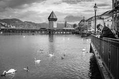 Lucerne (alexhaeusler) Tags: bridge blackwhite view lucerne kappellbrcke