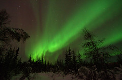 Green Sky (Lee Petersen) Tags: winter night nightsky fairbanks northernlights auroraborealis taiga borealforest