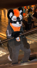 _DSC9096 (Acrufox) Tags: midwest furfest 2015 furry convention december hyatt regency ohare rosemont chicago illinois acrufox fursuit fursuiting mff2015