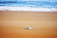 Playa de Langre, Cantabria, Spain (Gonzalo Aja) Tags: sea naturaleza seascape beach nature water rock stone de mar spain sand agua focus outdoor playa arena cantabria piedra langre d3000
