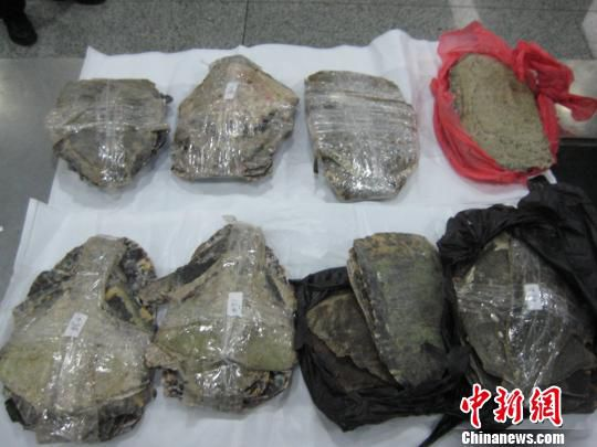 婴儿尿片暗藏12公斤玳瑁甲被深圳海关查获