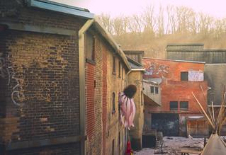 Purple Coneflower - Chimney Court (Explore)