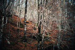 Woods calling (vincos) Tags: trees winter italy alberi forest landscape woods bokeh outdoor basilicata inverno bosco sirino