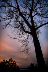 (astro twilight) Tags: sunset tree sillouette mountainviewcemetery