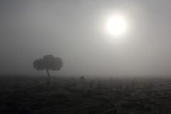 Senza tempo (Daniele Marongiu) Tags: sole nebbia albero tempo senza spettrale