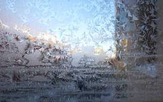 P1120440 (Anna Amnell) Tags: iceflowers kuurankukat