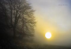 Niebla y sol (Jabi Artaraz) Tags: winter sol nature natura paseo invierno zb montaña frío niebla bruma airelibre negua eguskia hotza euskoflickr behelainoa jabiartaraz jartaraz