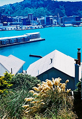 Harbour view (Stephen Dowling) Tags: travel newzealand summer film 35mm xpro crossprocess wellington russiancamera zenitttl sovietcamera agfact100precisa helios44582