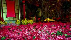Bellagio_Chinese New Year 1-3 (Swallia23) Tags: las vegas flowers money hotel peach chinesenewyear casio nv bellagio yearofthemonkey 2016 conservatorybotanicalgarden