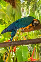 NE_ilheus0019 (Visit Brasil) Tags: vertical brasil fauna natureza bahia nordeste detalhe ilheus externa ilhus semgente diurna