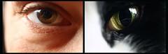 Look into my eyes (TempusVolat) Tags: woman eye cat eyes feline pussy human puss pussycat gareth catseye tempus pusscat cateye volat wonfor mrmorodo garethwonfor tempusvolat