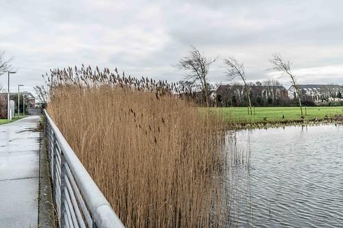 Wind Powered Public Park In Clongriffin Dublin [Father Collins Park]-110968
