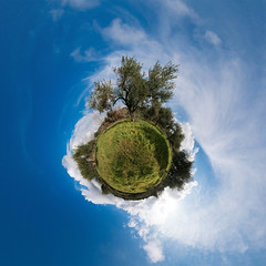 Olive trees (HamburgerJung) Tags: pentax planet sicily sicilia k3 stereographic sizilien cassibile littleplanet