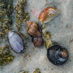 tidal pool (nosha) Tags: ocean california ca sea beach pool beautiful beauty pacific pacificgrove tidal 2016 nosha