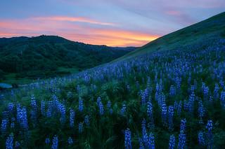 Hillside In Blue