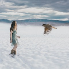 (Nadia Eleanor) Tags: wood morning blue winter white snow cold bird ice photoshop outside fly friend fantasy dreamland sonya7