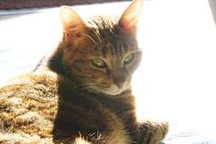 Bain de soleil (stephane_gregoire) Tags: contrejour backlighting crevette